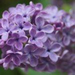 DIY Lilac Corrector thumbnail
